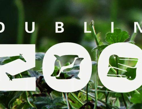 Adapt an Animal from Dublin Zoo